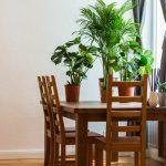 Комнатные цветы и растения, уход за ними в домашних